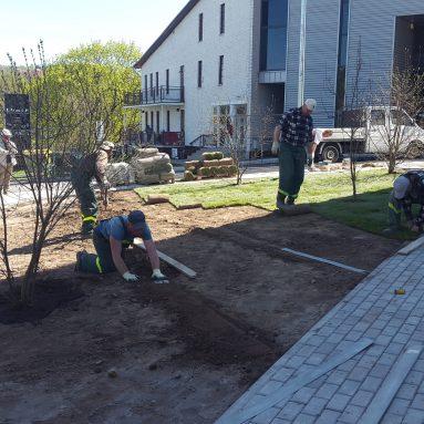 Apželdinimas, vejų įrengimas
